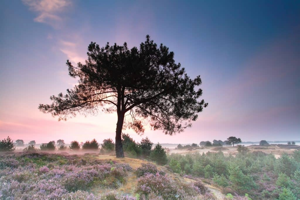 Prachtige heidevelden - Dwingelderveld