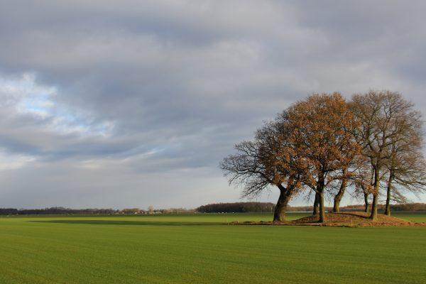 Geopark De Hondsrug - Grafheuvel bij Drouwen - Fietsvakanties Drenthe