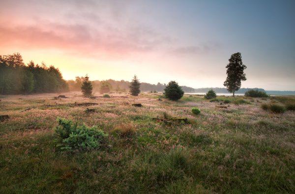 Natuurpark Dwingelderveld - Wandelvakantie Drenthe