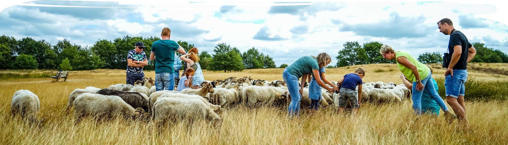 Wandelen met de schaapherder © Pamela Joyce Fotografie