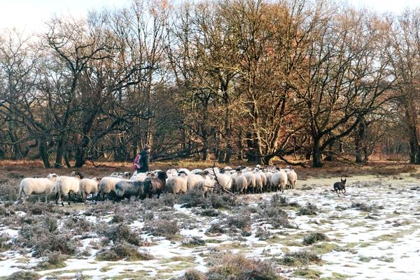 Winter wandeltocht over de Hondsrug Drenthe